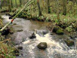 Shallow water habitats important for young salmon and trout