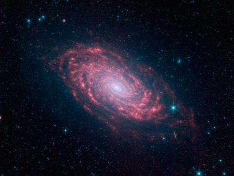 Spitzer captures infrared rays from a sunflower