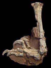 Strange predatory dinosaur from Europe's Late Cretaceous