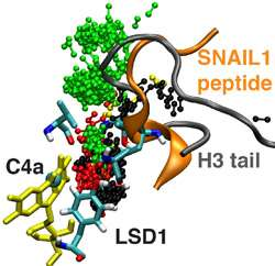 Structure, dynamics of a chemical signal that triggers metastatic cancer revealed