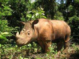 Sumatran rhino is one of the world's most endangered species