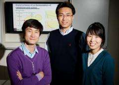 Team overcomes major obstacles to cellulosic biofuel production