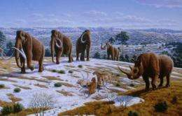 The reindeer and the mammoth already lived on the Iberian Peninsula 150,000 years ago