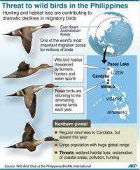 Threat to wild birds in the Philippines