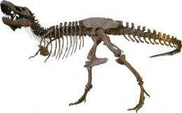 T. rex more hyena than lion