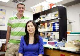 UF discovery could lead to better genetic screening for diabetes (w/ Video)