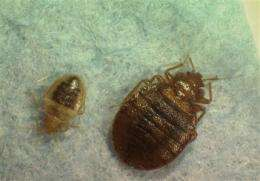 US grapples with bedbugs, misuse of pesticides (AP)