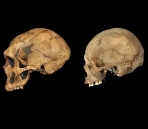 A new understanding of the evolutionary path of modern humans