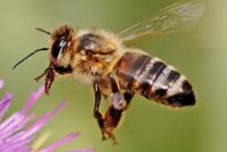 Artificial bee eye gives insight into insects' visual world