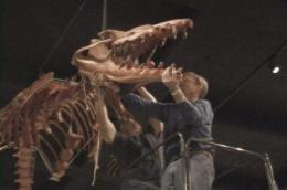 Colossal fossil: Museum's new whale skeleton represents decades of research