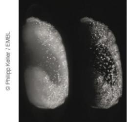 Digital embryo gains wings