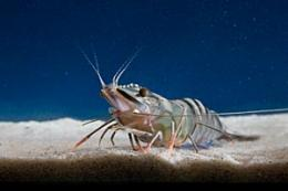 Is this the perfect prawn?