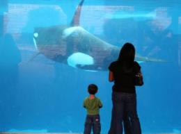 Killer whales and the mystery of human menopause
