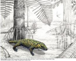 New fossil amphibian provides earliest widespread evidence of terrestrial invertebrates