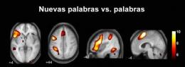 Nouns and verbs are learned in different parts of the brain