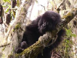 Primates are more resilient than other animals to environmental ups and downs