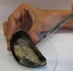 Shellfish not safe to eat marked with warning light