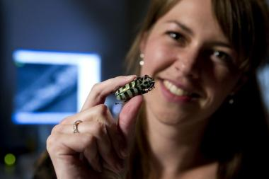 Futuristic computing designs inside beetle scales