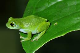 Search for 'lost' frogs yields important warnings, few findings