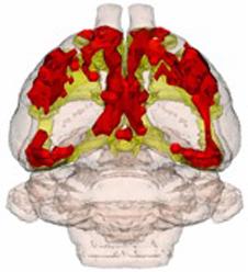 Breakthrough technology for testing Alzheimer's and Parkinson's drugs