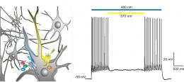 Light switches for nerve cells