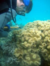 Diversity of Corals, Algae in Warm Indian Ocean Suggests Resilience to Future Global Warming