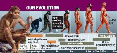 New species of early hominid found