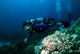 Scientists call on US to stem ecological impact of trade in coral reef wildlife