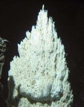 Hydrogen and Methane Sustain Unusual Life at Sea Floor's 'Lost City'
