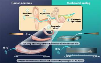 New MEMS sensor based on human organ is no tin ear