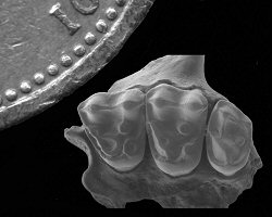 Tiny primate fossils shed new light on our ancient ancestors