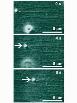 Three snapshots showing the transport of a micrometer bead (white arrow) at 0, 4, and 8 seconds.