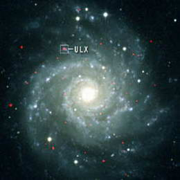 X-Rays signal presence of elusive intermediate-mass black hole