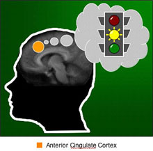 Brain region learns to anticipate risk, provides early warnings