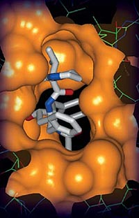 Research at Argonne helps Abbott Labs develop anti-HIV drug