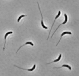 Figuring out function from bacteria's bewildering forms