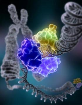 Genetic repair mechanism clears the way for sealing DNA breaks