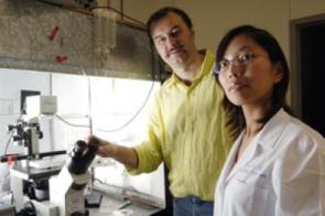 Test reveals effectiveness of potential Huntington's disease drugs