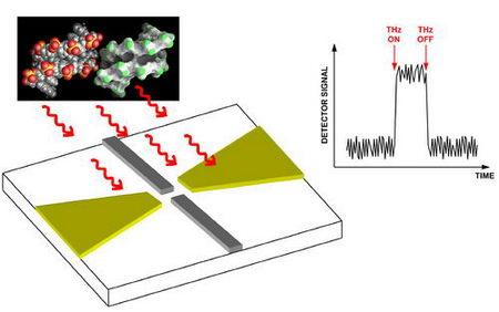 Toward Terahertz Detectors on a Single, Conventional Chip