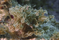 Expedition discovers marine treasures