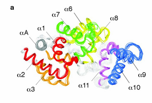 Scientists Discern Shape of Important Protein