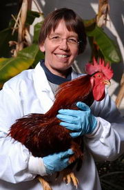 Scientists Restore Sight to Chickens with Blinding Disease
