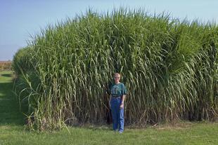 Biofuels as Invasive Species?