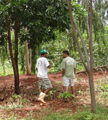 Agriculture and tropical conservation: rethinking old ideas