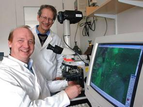 Nanotechnology brings brain recovery in sight