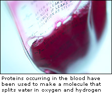 Genetically engineered blood protein can be used to split water into oxygen and hydrogen