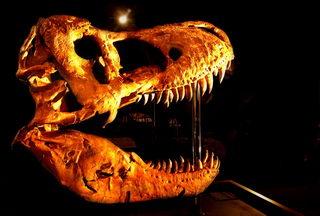 Museum unveils world's largest T-rex skull