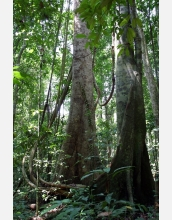Nature encourages biodiversity, study
