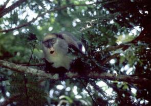 Predators prefer to hunt small-brained prey