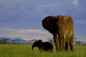 Serengeti Patrols Cut Poaching of Buffalo, Elephants, Rhinos